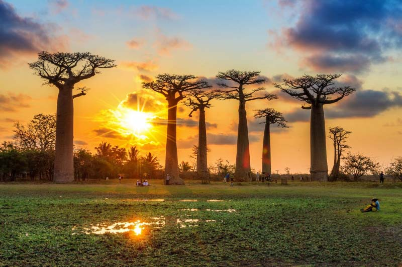 Madagascar_Avenue_of_the_Baobabs