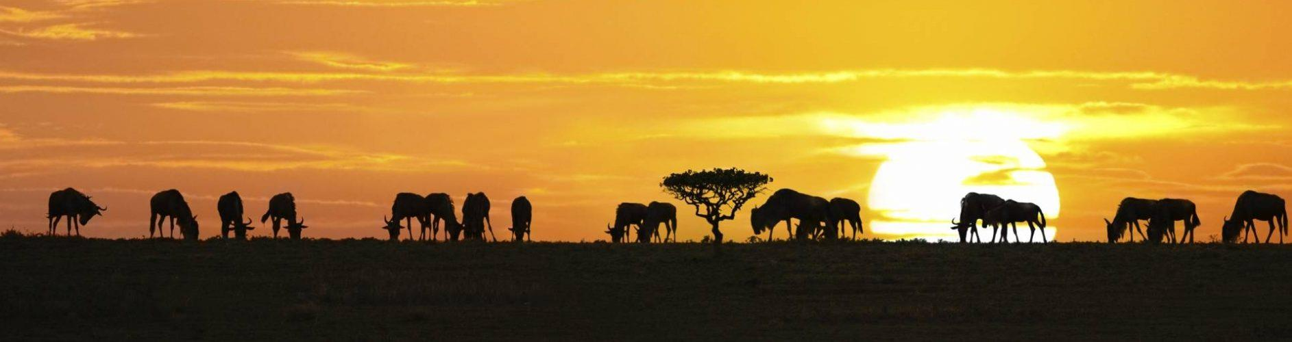 Tanzania_Serengeti_National_Park_wildlife_zonsopgang