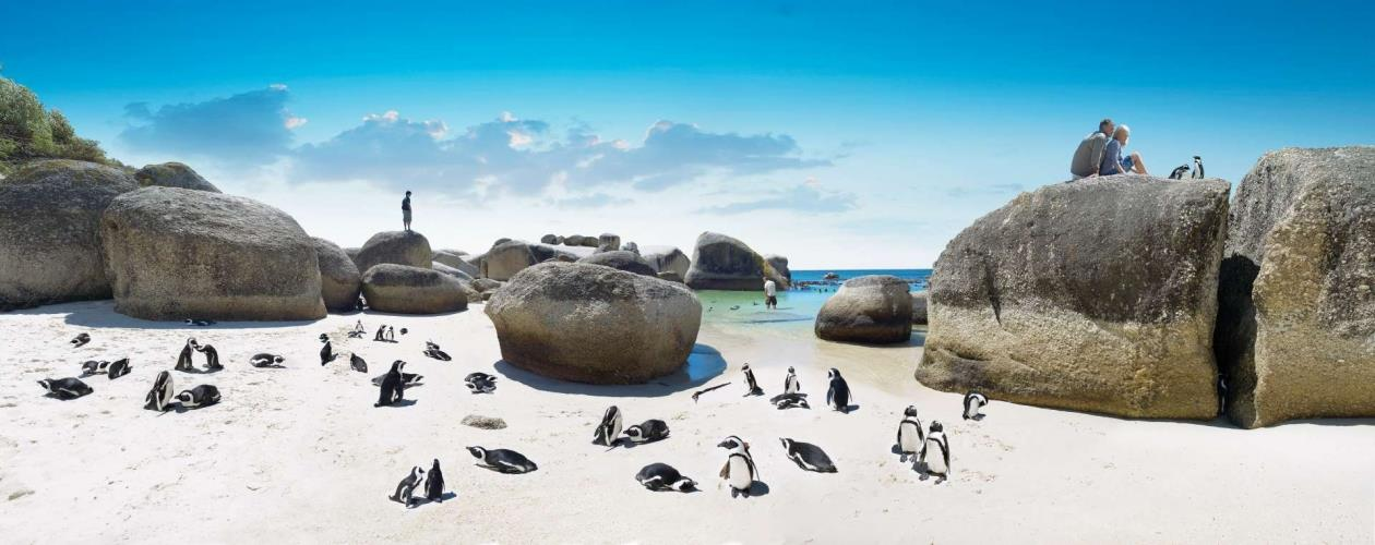 Zuid-Afrika_Boulders_Beach_pinguins