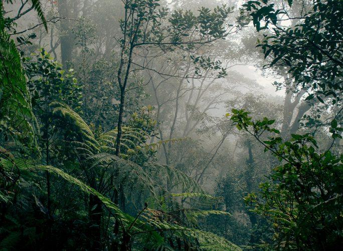 Maleisie_Borneo_rainforest