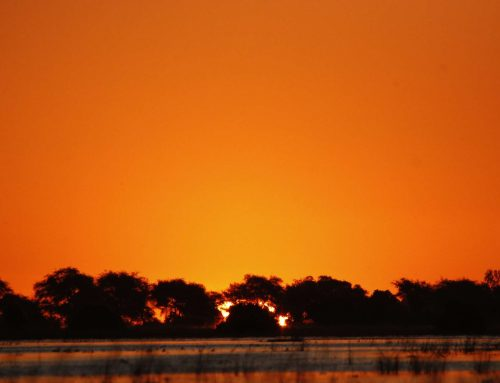 Botswana – Chobe National Park