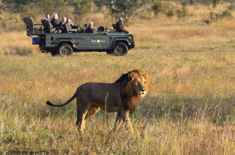 Zuid-Afrika_Sabi_Sands_Game_Reserve_Dulini_Lodge_safari_leeuw
