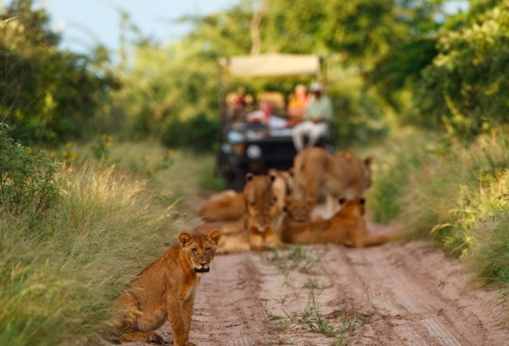 Botswana_Central_Kalahari_Game_reserve_Deception_Valley_Lodge_safari_leeuwen